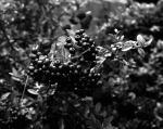 garden004