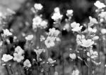 spring179