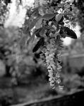 spring180