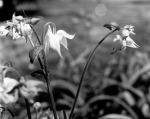 spring183
