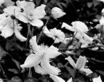 spring184